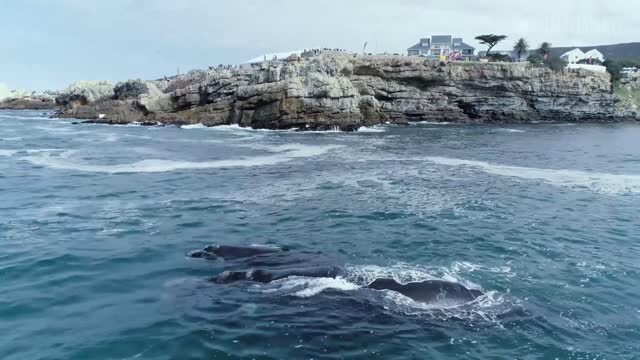 these wonderful whales were filmed via drone off the coast of south africa. this is what the uploader told storyful about the incredible footage... - hermanus stock videos & royalty-free footage