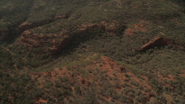 thick desert tree cover, northern territory - northern territory australia stock videos & royalty-free footage