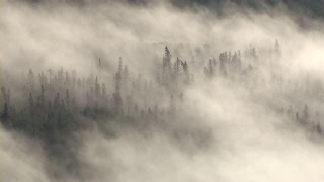 Thick fog almost completely covers a Boreal forest in Alberta, Canada.