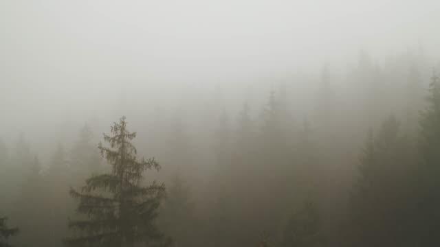 dicker nebel, der einen wald bedeckt - nebel stock-videos und b-roll-filmmaterial