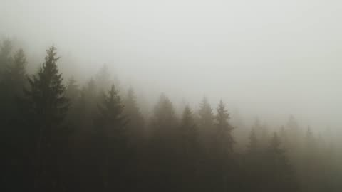 thick fog covering a forest - pine tree stock videos & royalty-free footage