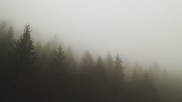 thick fog covering a forest - thick stock videos & royalty-free footage