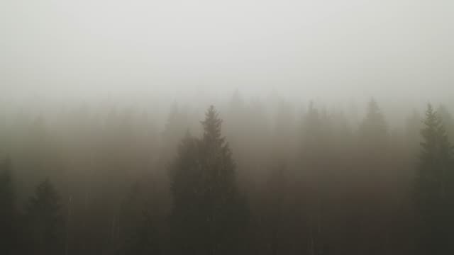 thick fog covering a forest - pinaceae stock videos & royalty-free footage