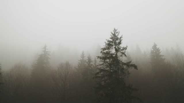 thick fog covering a forest - fir tree stock videos and b-roll footage