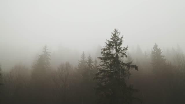 vídeos de stock, filmes e b-roll de névoa grossa que cobre uma floresta - ominoso