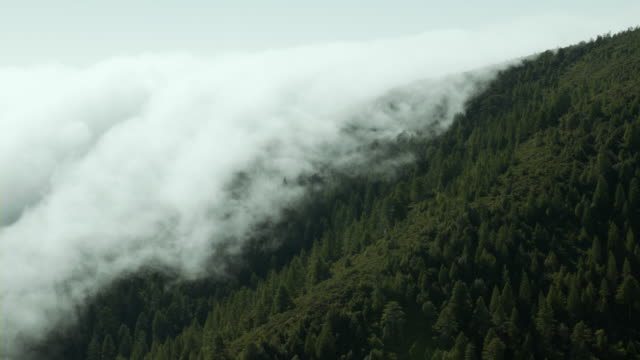 Thick fog covers evergreen forest growing on a mountainside in Northern California.