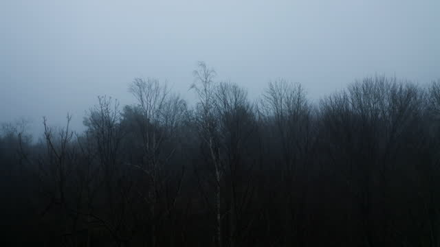 thick fog over a forest - ominous stock videos & royalty-free footage