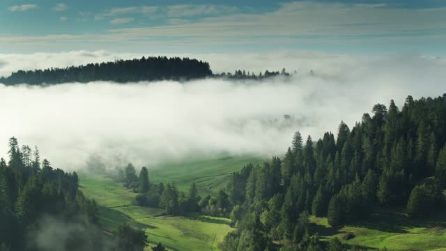thick fog winding between trees - aerial - sequoia stock videos & royalty-free footage