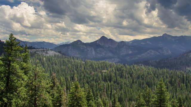 dicker wald im yosemite-tal - zeitraffer - amerikanische sierra nevada stock-videos und b-roll-filmmaterial