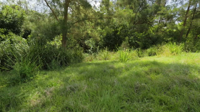 thick green forest grass, qld island - surrounding stock videos & royalty-free footage