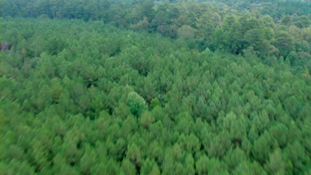 Thick leafy trees characterize a dense forest in Mississippi.