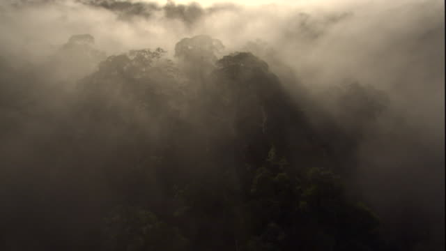 A thick mist shrouds the rainforest canopy of Sabah, Borneo. Available in HD.