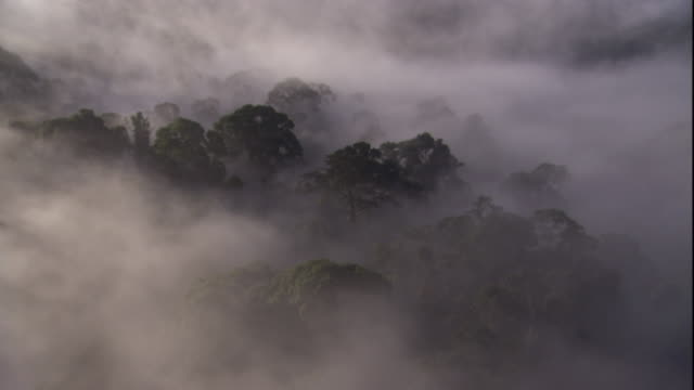 a thick mist shrouds the rainforest canopy of sabah, borneo. available in hd. - rainforest stock videos & royalty-free footage