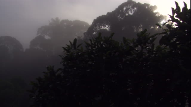 a thick mist shrouds the rainforest, sabah, borneo. available in hd. - rainforest stock videos & royalty-free footage