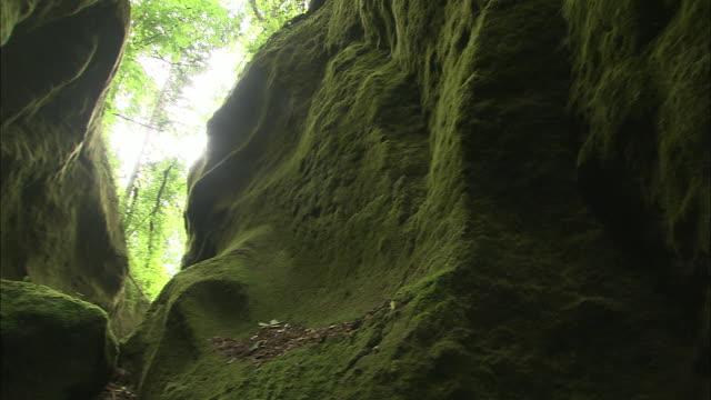 vidéos et rushes de thick mosses cover the rock formations of kokenodomon - mousse végétale