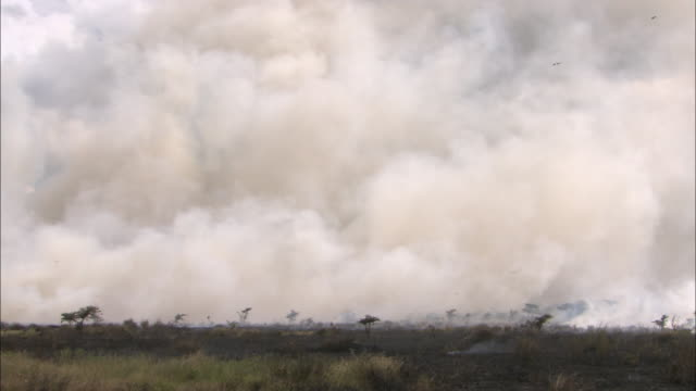thick smoke billows across plains during  grass fire. - accidents and disasters stock videos & royalty-free footage