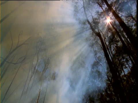 Thick smoke billows through gum tree forest, Australia