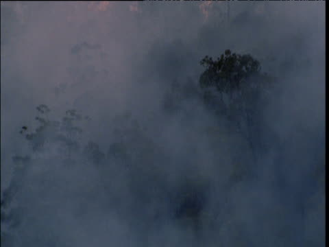 thick smoke from bush fire drifts over forest near sydney, australia - smoke physical structure stock videos & royalty-free footage
