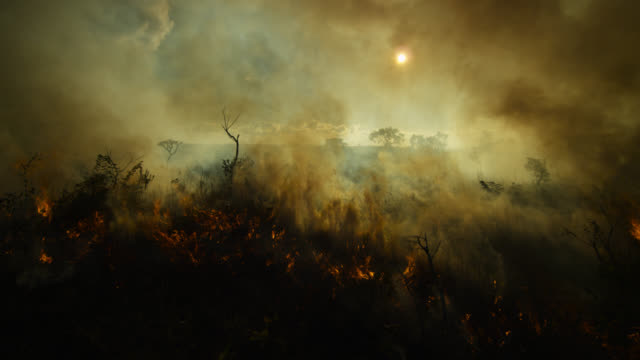 Thick smoke rises from burning cerrado grassland.