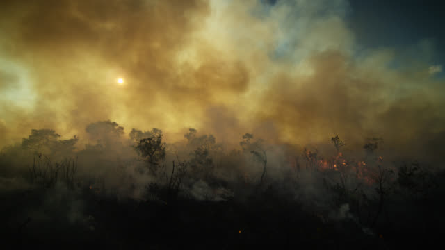 vidéos et rushes de thick smoke rises from burning cerrado grassland. - colour image