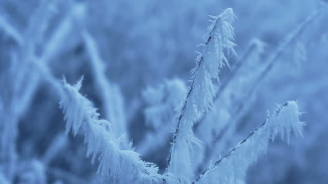 thick soft rime on swaying branches, close up - 枝点の映像素材/bロール