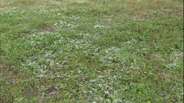 Thin frost covers a green field in Morioka Takamatu Park, Japan.