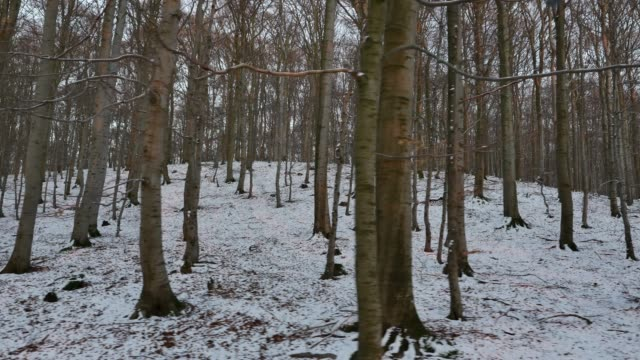 thin layer of snow blankets deciduous forest floor - black forest stock videos & royalty-free footage