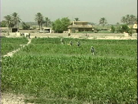 third infantry division us soldiers walking in cornfield during patrol of rural area / arab jabour iraq / audio - unknown gender stock videos & royalty-free footage
