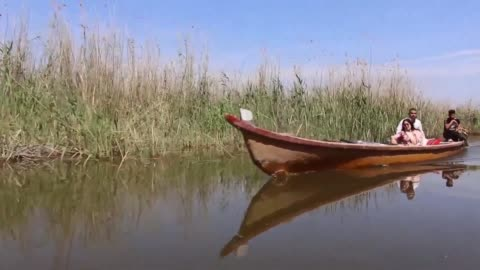 thirty years after saddam hussein starved them of water iraq's southern marshes which straddle the famous tigris and euphrates rivers are blossoming... - marsh stock videos & royalty-free footage