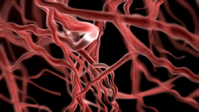 This animation depicts a zoomed section of veins moving because of the rhythmic pumping of the cardio vascular system, the systole and diastole.