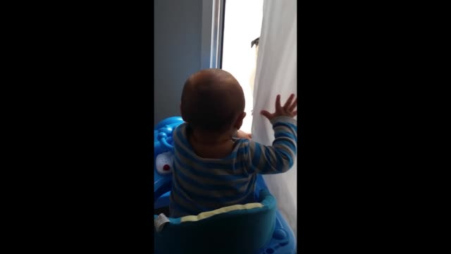 this baby can't stop laughing during an adorable game of peekaboo with a pug. cuteness overload! - peekaboo game stock videos & royalty-free footage