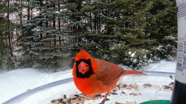 this back yard bird feeder in ontario canada is a busy spot for birds of all kinds, especially during the cold winter months when food is scarce. and... - take that stock videos & royalty-free footage