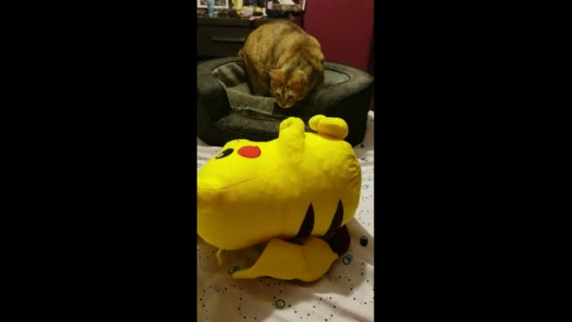 this cat is scared of a pikachu plush toy when its owner pushes it to make it appear to be alive. not cool! - pokémon stock videos & royalty-free footage