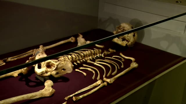 this clip contains black gaps - third party content removed. voiced: the oldest complete skeleton ever found in britain now has a face - and not one... - archaeology stock videos & royalty-free footage