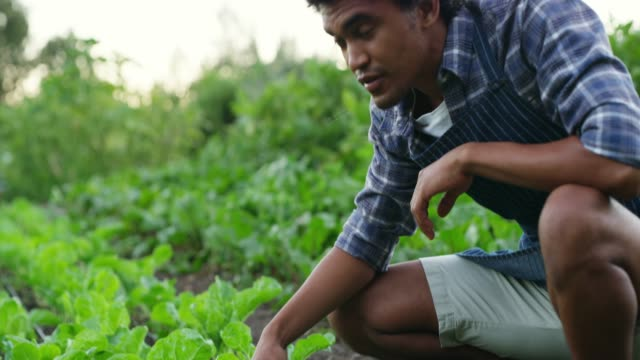 vídeos de stock e filmes b-roll de this is a great for farming - plantação