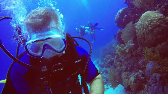 this is one of those things that should come with a warning not to attempt it but this scuba diver was too curious to see if it was possible to... - eventuell stock-videos und b-roll-filmmaterial