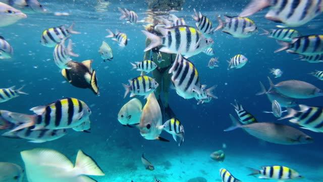 vídeos de stock, filmes e b-roll de isto é o que a liberdade se parece - deep sea diving