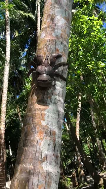 vídeos de stock e filmes b-roll de this massive coconut crab is actually only half-sized - organismo aquático