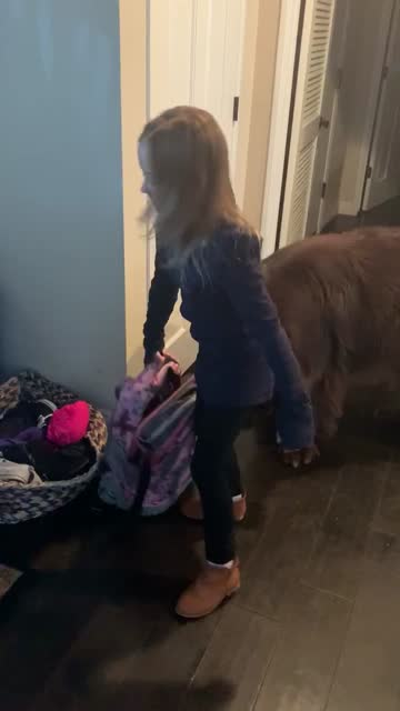 """stockvideo's en b-roll-footage met """"this morning sierra and her huge newfoundland dog are playing tag and peek-a-boo. sierra is not happy when mom tells her itõs time for school. òi... - genomen met mobiel apparaat"""