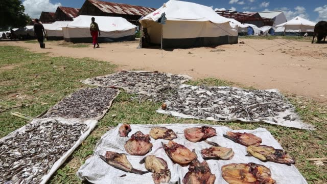 this shot shows fish drying in a refugee camp in bangula in mid january 2015 a three day period of excessive rain brought unprecedented floods to the... - tropical fish stock videos & royalty-free footage