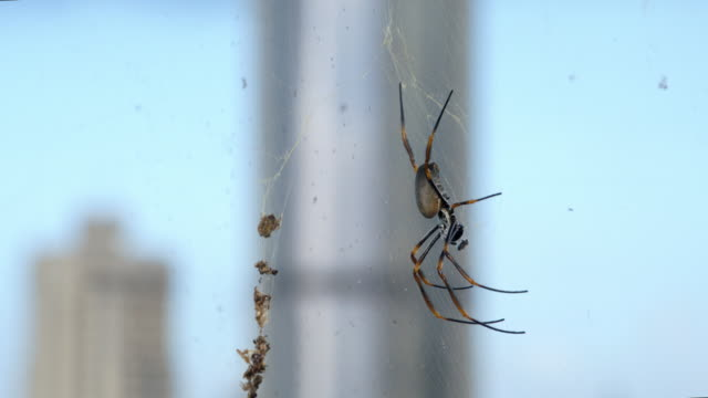 this spider has the best view - spider web stock videos & royalty-free footage