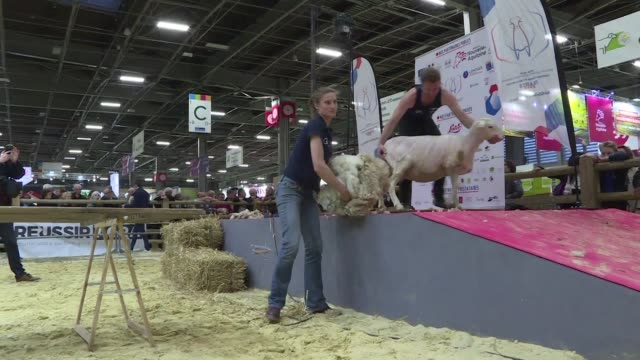 This summer France will be holding the World Sheep Shearing Championship 2019 in the Nouvelle Aquitaine region