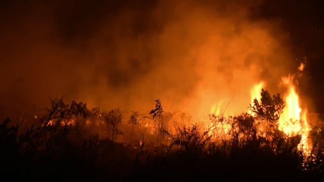 vídeos de stock, filmes e b-roll de this video taken on october 06 2019 shows an indonesian firefighter battling a forest fire in pekanbaru regency riau province indonesia the fires and... - fire natural phenomenon