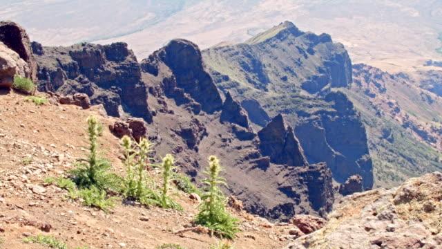 thistle on cliff edge summit steens mountain near malhuer wildlife refuge 30 - thistle stock videos & royalty-free footage