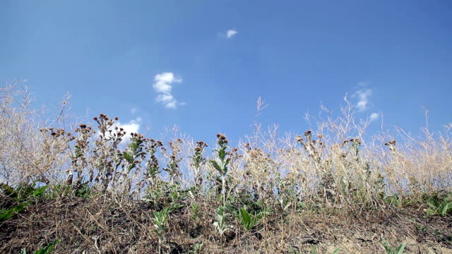 thistles - thistle stock videos & royalty-free footage