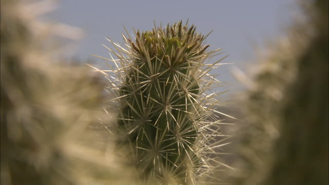 Thorns characterize a tall cactus.