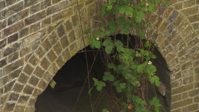 thorny plants dangle across an arch on part of the disused munitions production site waltham abbey royal gunpowder mills, essex, uk. - arch stock videos & royalty-free footage