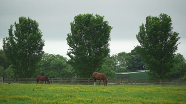 Thoroughbred horses in lush field of flowers