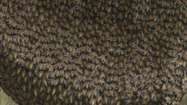 thousands of bees form a mass. - 虫の群れ点の映像素材/bロール