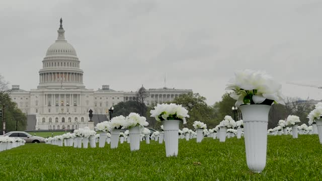 """thousands of flowers were placed at a national park in washington in commemoration of the victims losing their lives in gun violence incidents. """"the... - gun stock videos & royalty-free footage"""